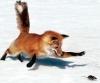 Свечи зажигания - последнее сообщение от fox